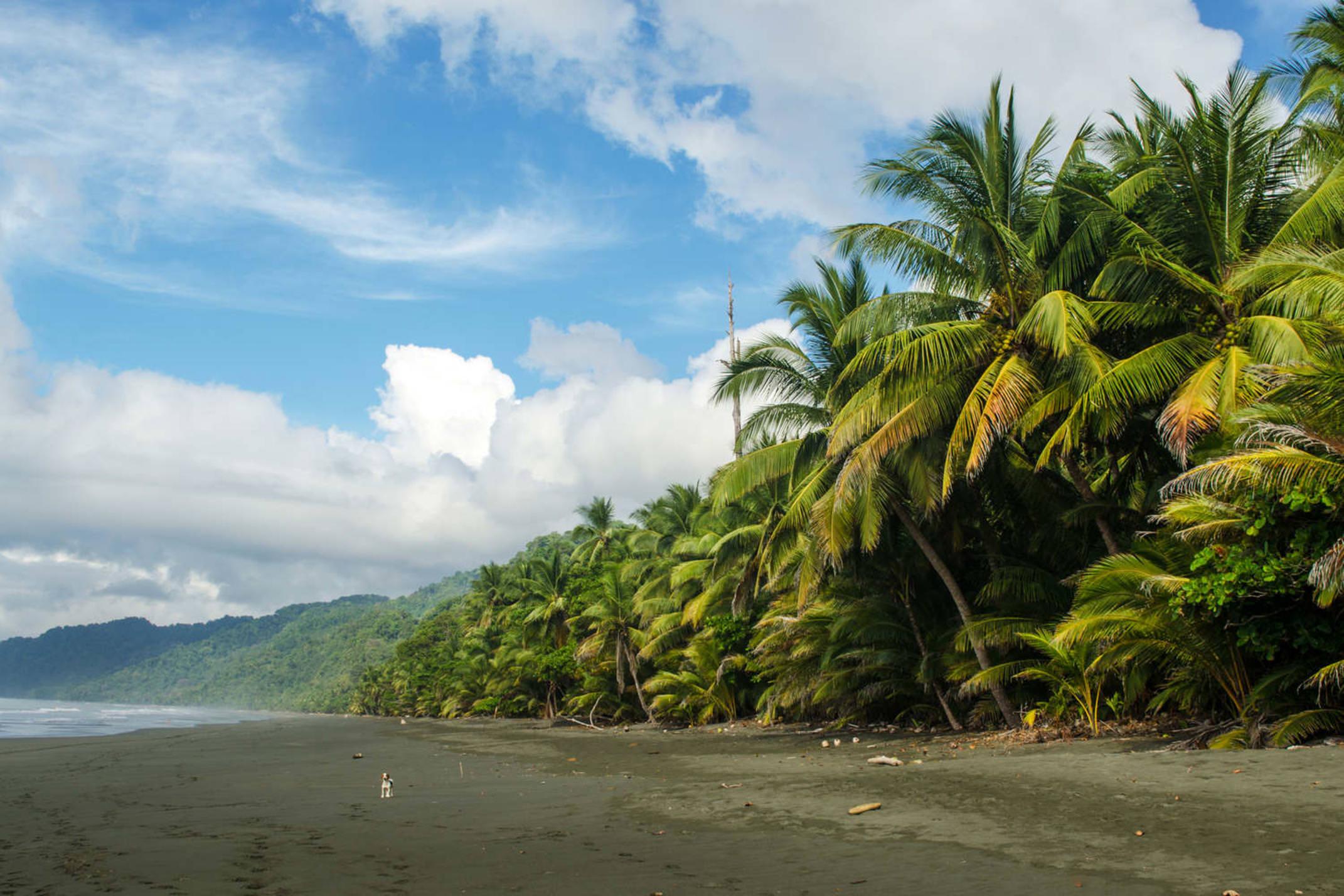 Costa rica osa peninsula corcovado national park beach view osa peninsula costa rica