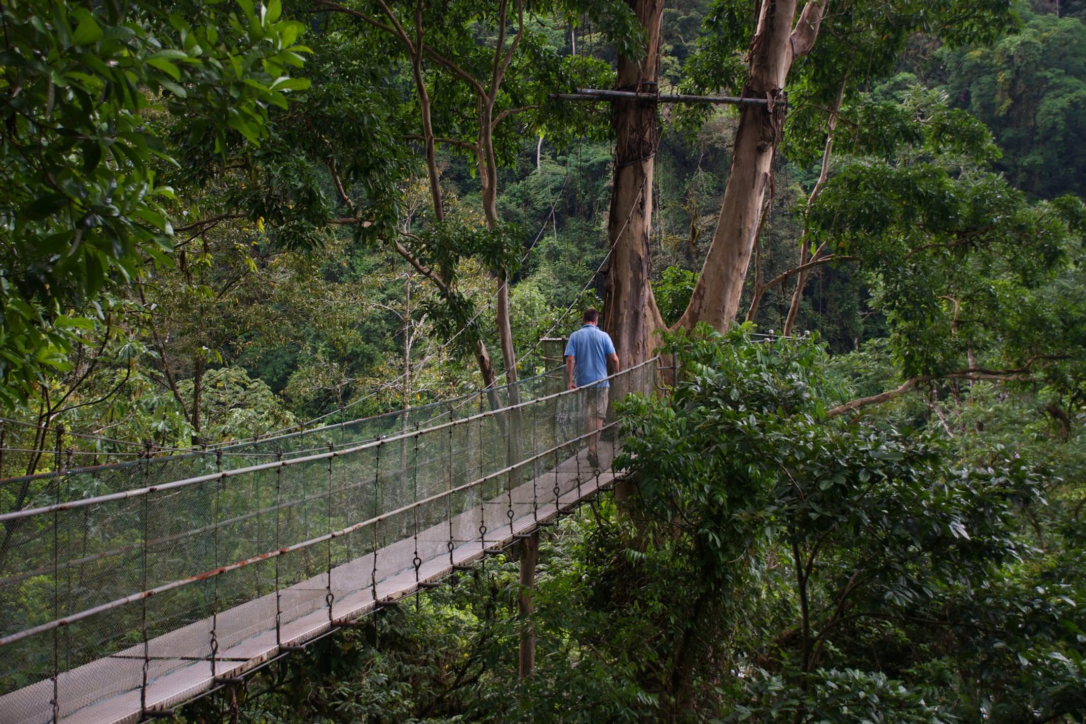 Costa rica pacuare lodge walking across canopy walkway