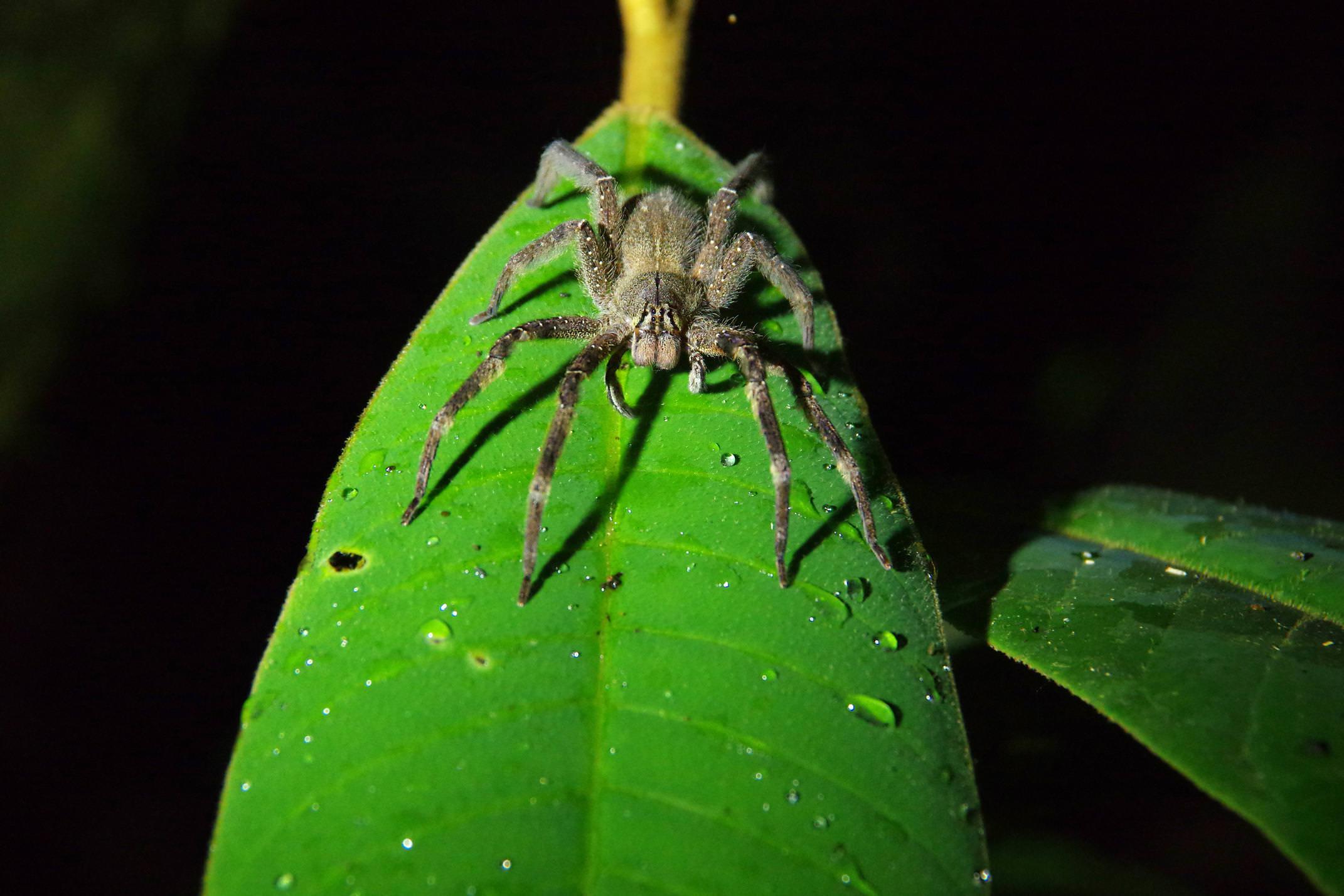 Ecuador amazon tarantula eden lodge chris bladon