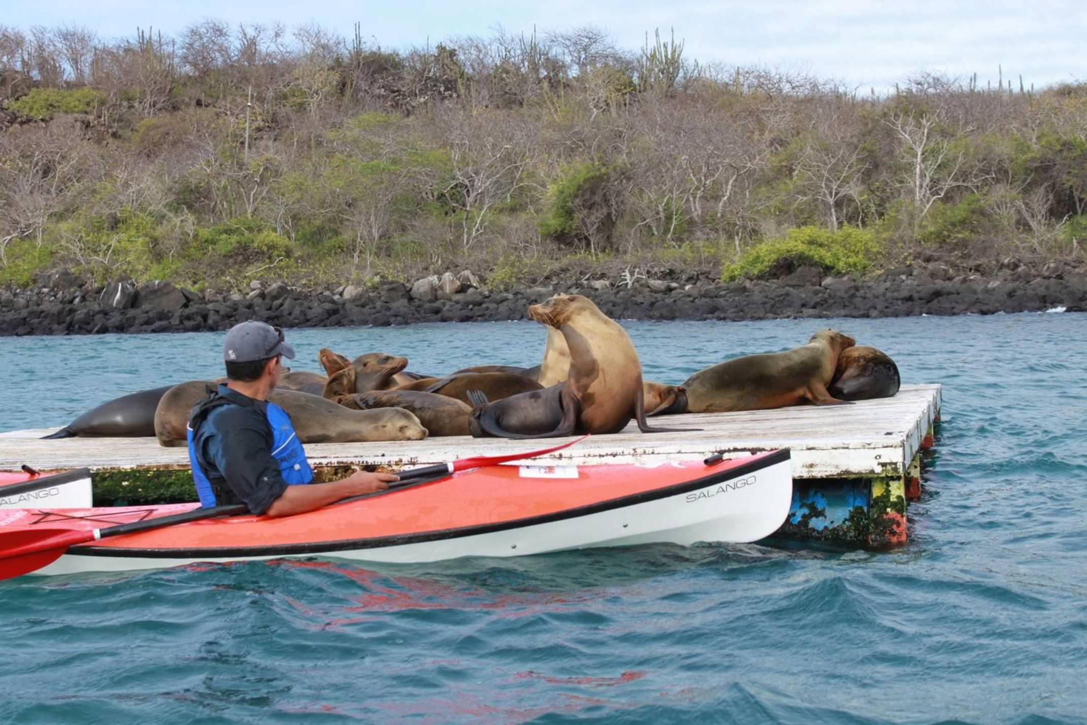 Ecuador galapagos islands land based galapagos kayak alongside sea lions20180829 76980 1blhzzh