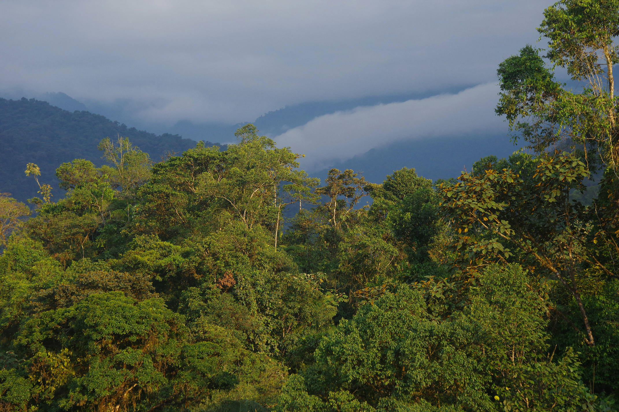 Ecuador mindo cloud forest canopy 2 chris bladon