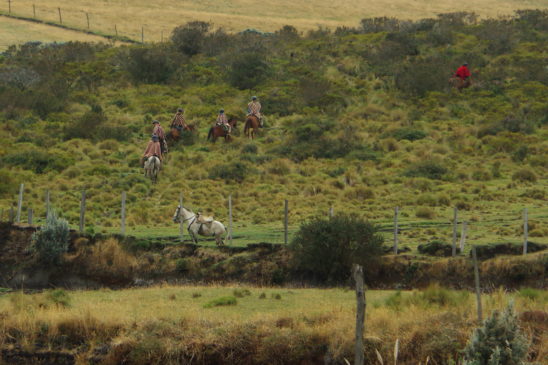 Ecuador cotopaxi porvenir horse riding chris