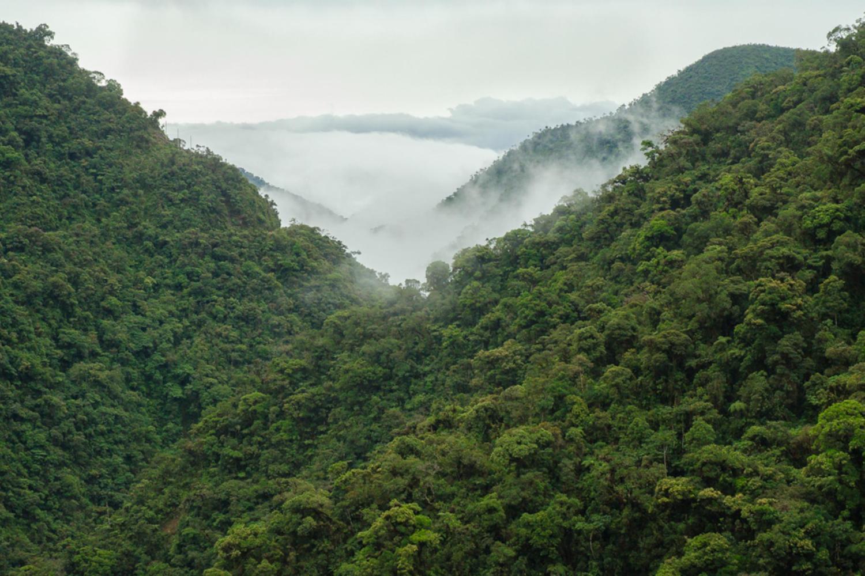 Peru-Manu-view-across-the-cloudforest-c-crees.jpg