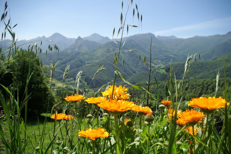 Spain-Picos-de-Europa-Near-Tollo