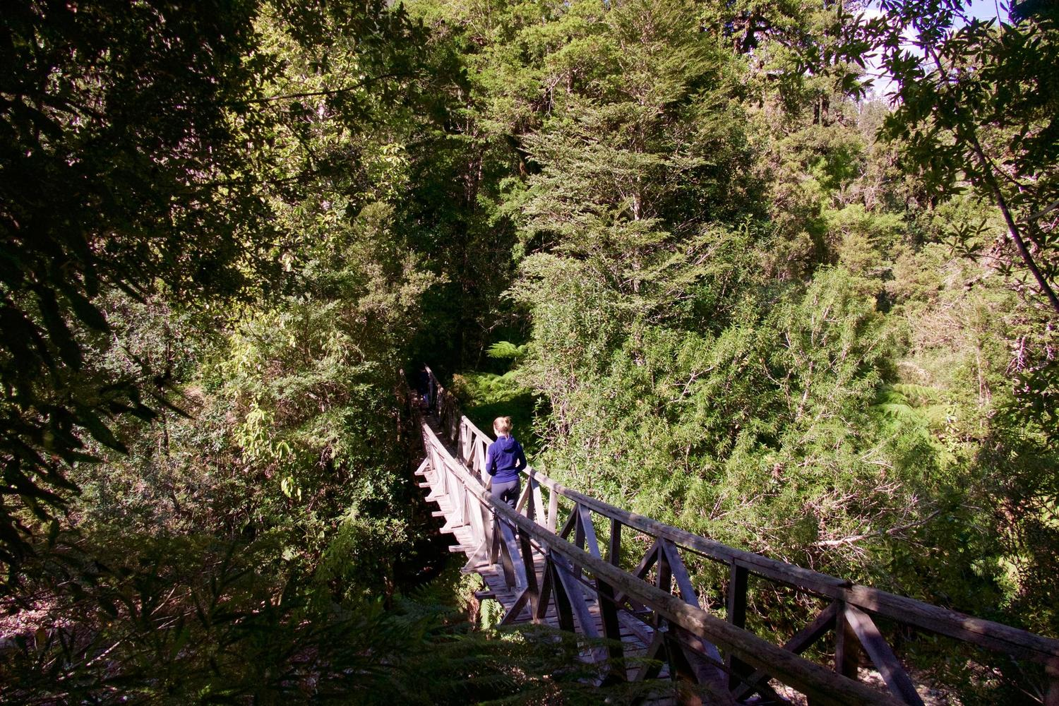 Walking in the Alerce forests of Pumalin