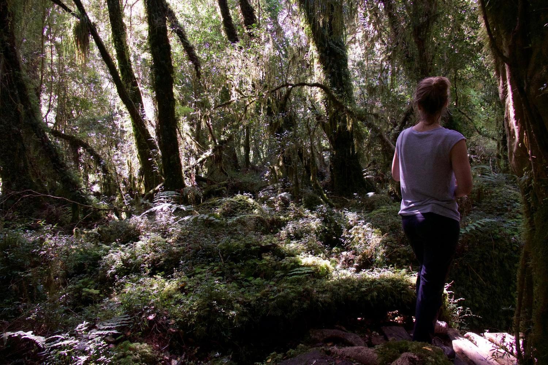 The Cascadas hike in Pumalín Park