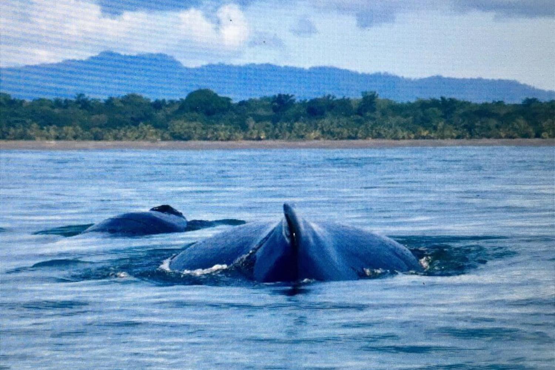 whale in Drake Bay, Osa Peninsula, Costa Rica