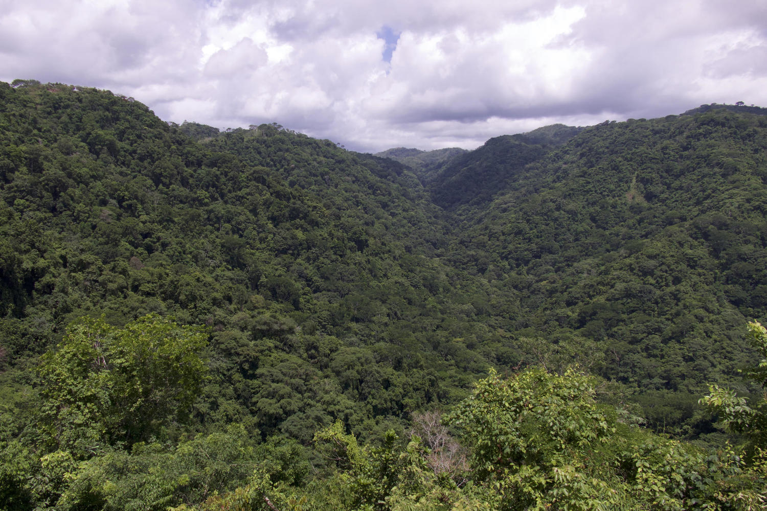 the forests of Carara