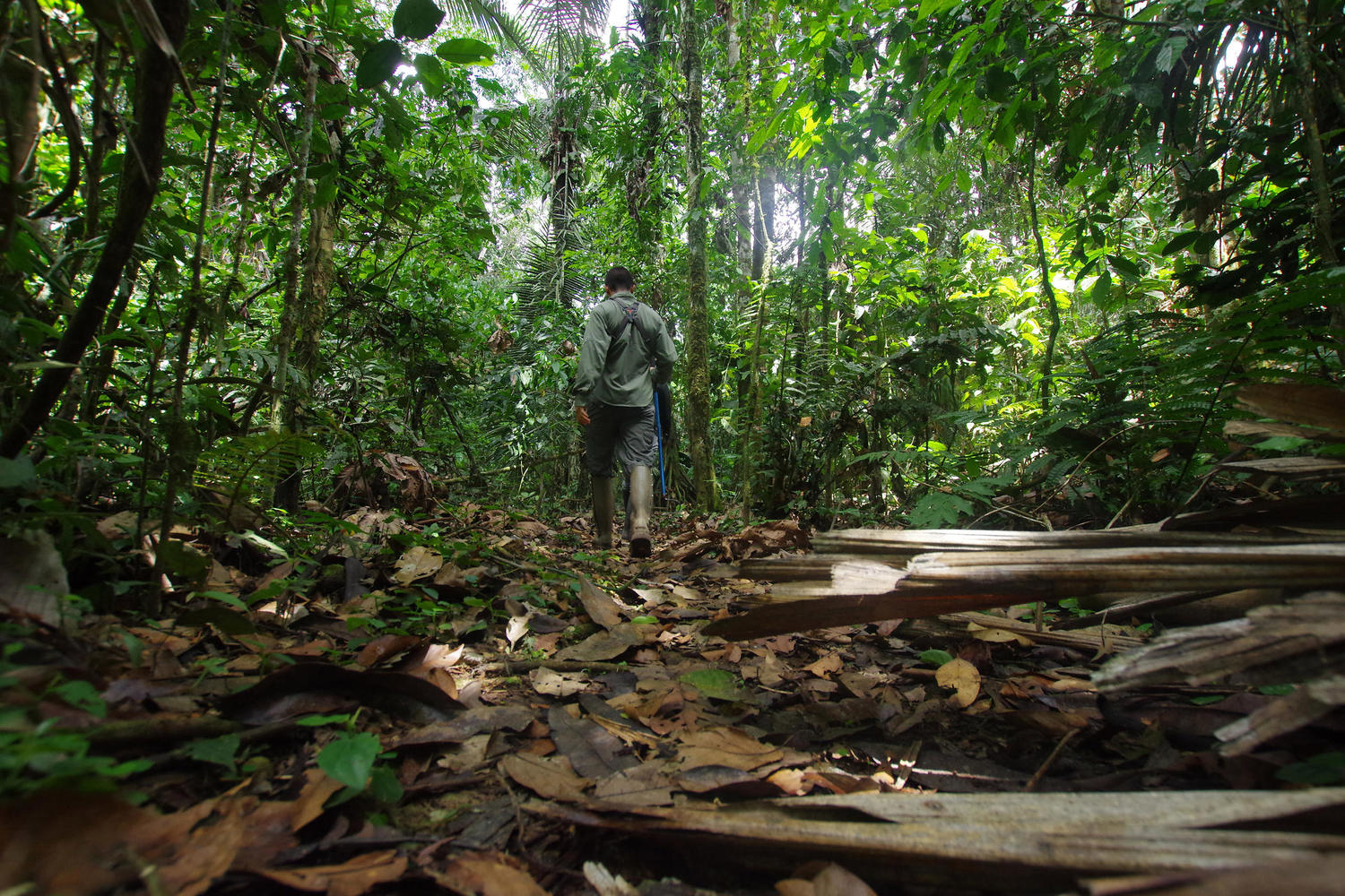 Walking with a naturalist guide in the Ecuadorian Amazon