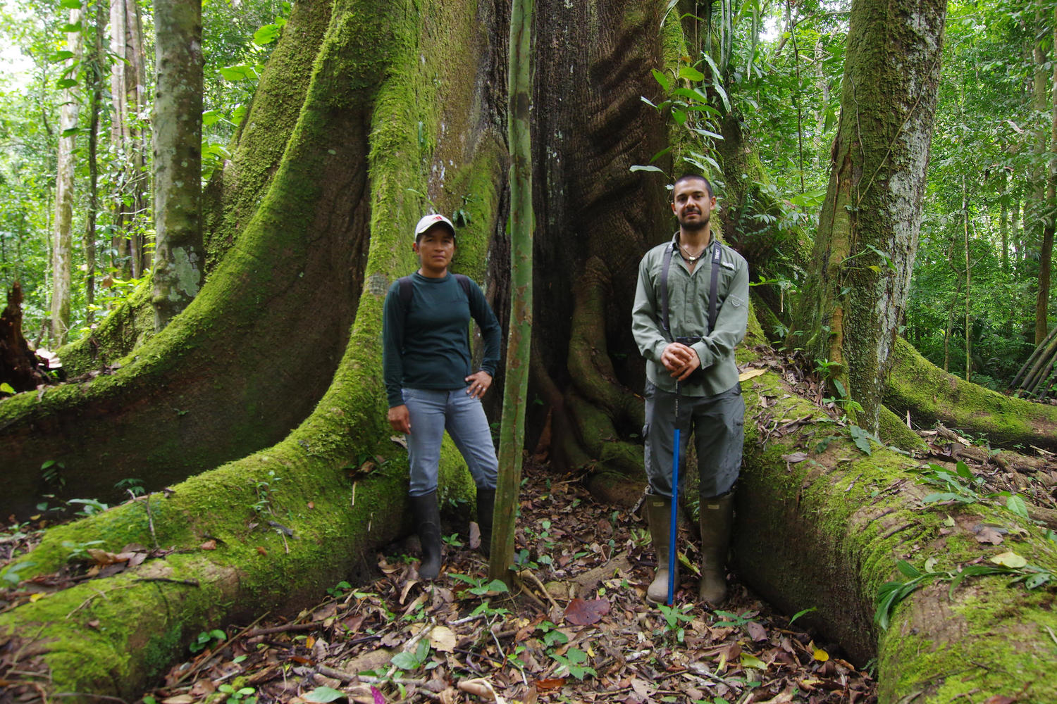 Rocio and Sina standing in the huge buttress roots of a giant ceiba tree