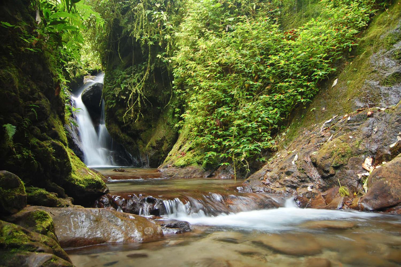 Ecuador's Mindo Cloud Forest