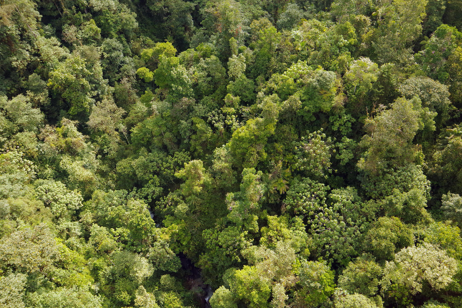 View over cloud forest canopy from Minjoy chairlift, Mindo