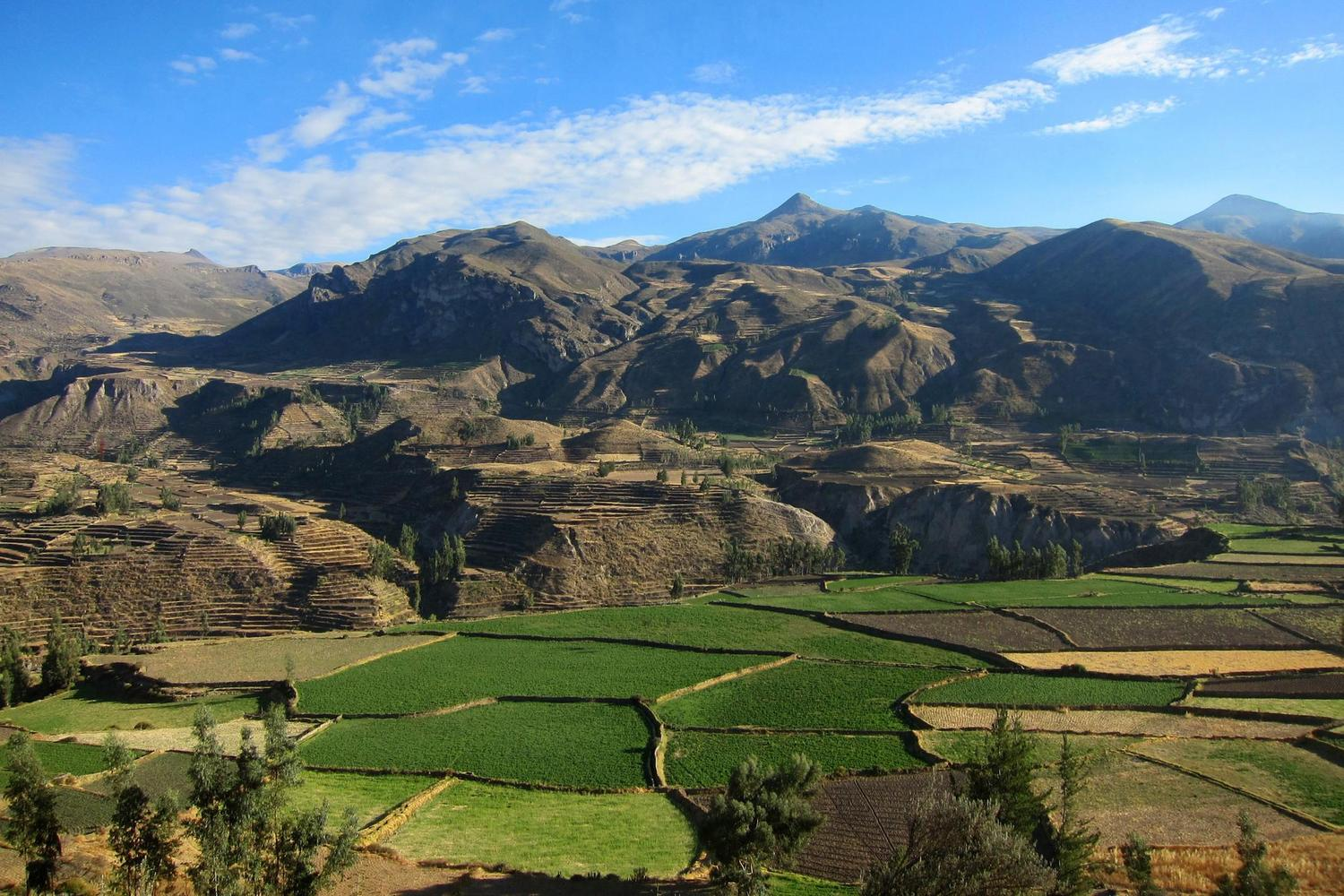Looking out over the Colca Canyon