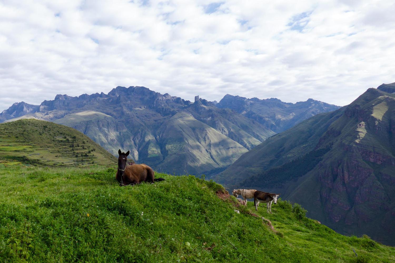 peru-cusco-huchuy-camp-horses
