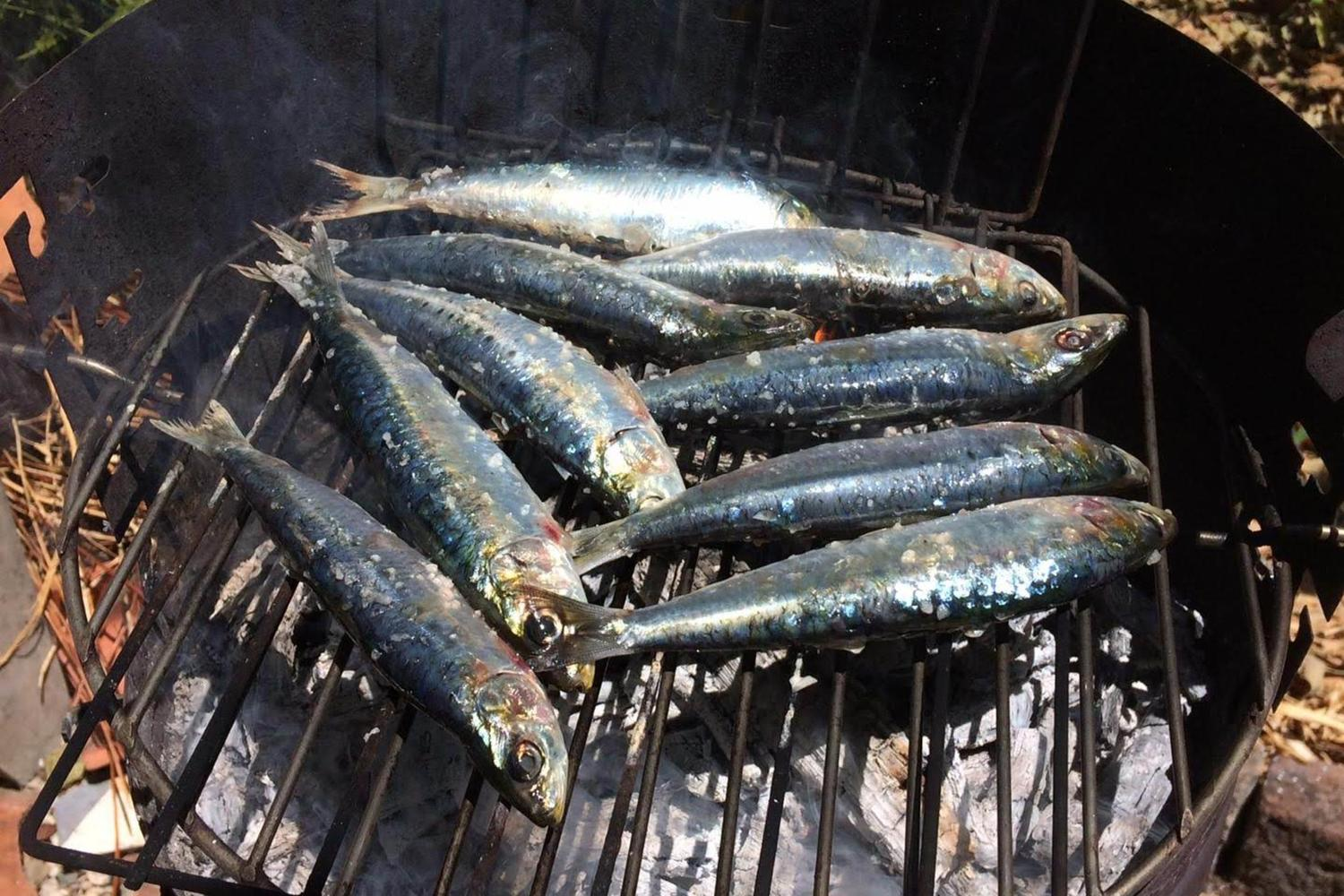 Grilled sardines in Alentejo