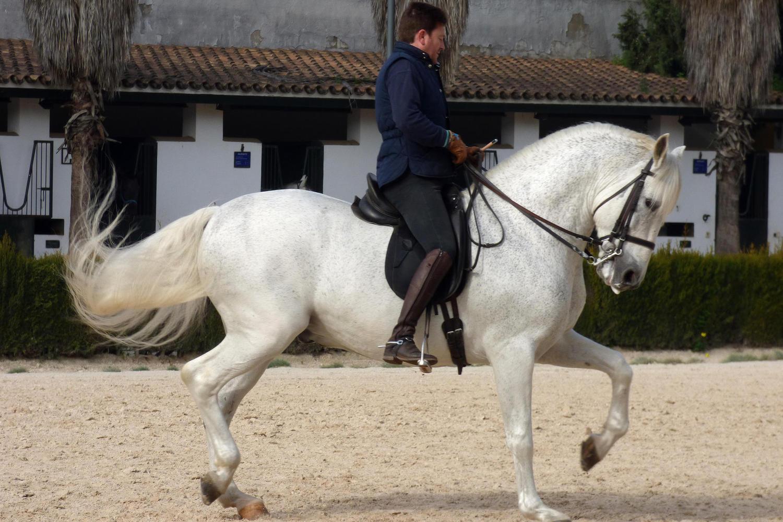 horse school in Jerez