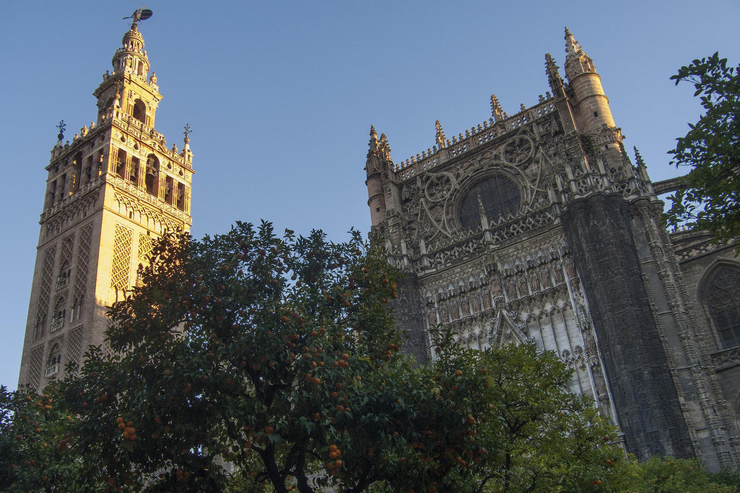 The orange courtyard of the cathedral in Seville