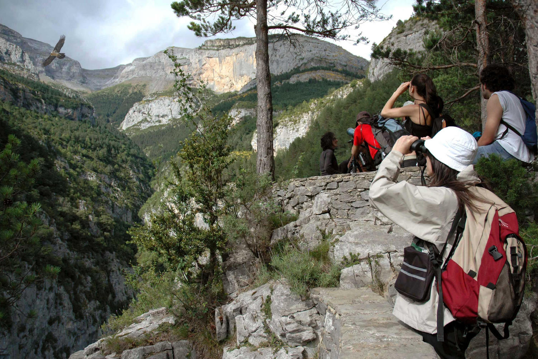 spain-pyrenees-revilla-fcq-bearded-vulture-bird-watching