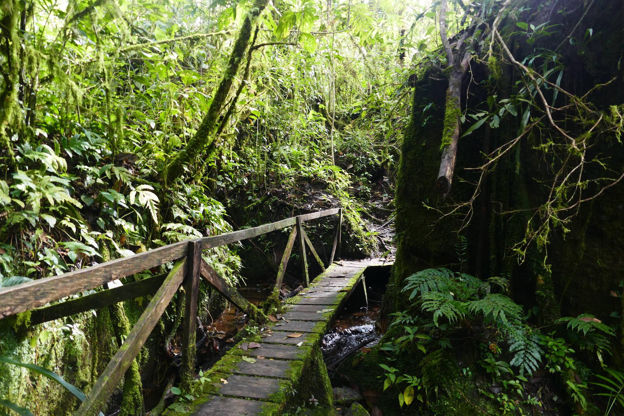 Nicaragua jinotega penas blancas path to cascada arcoiris copyright pura emma bye