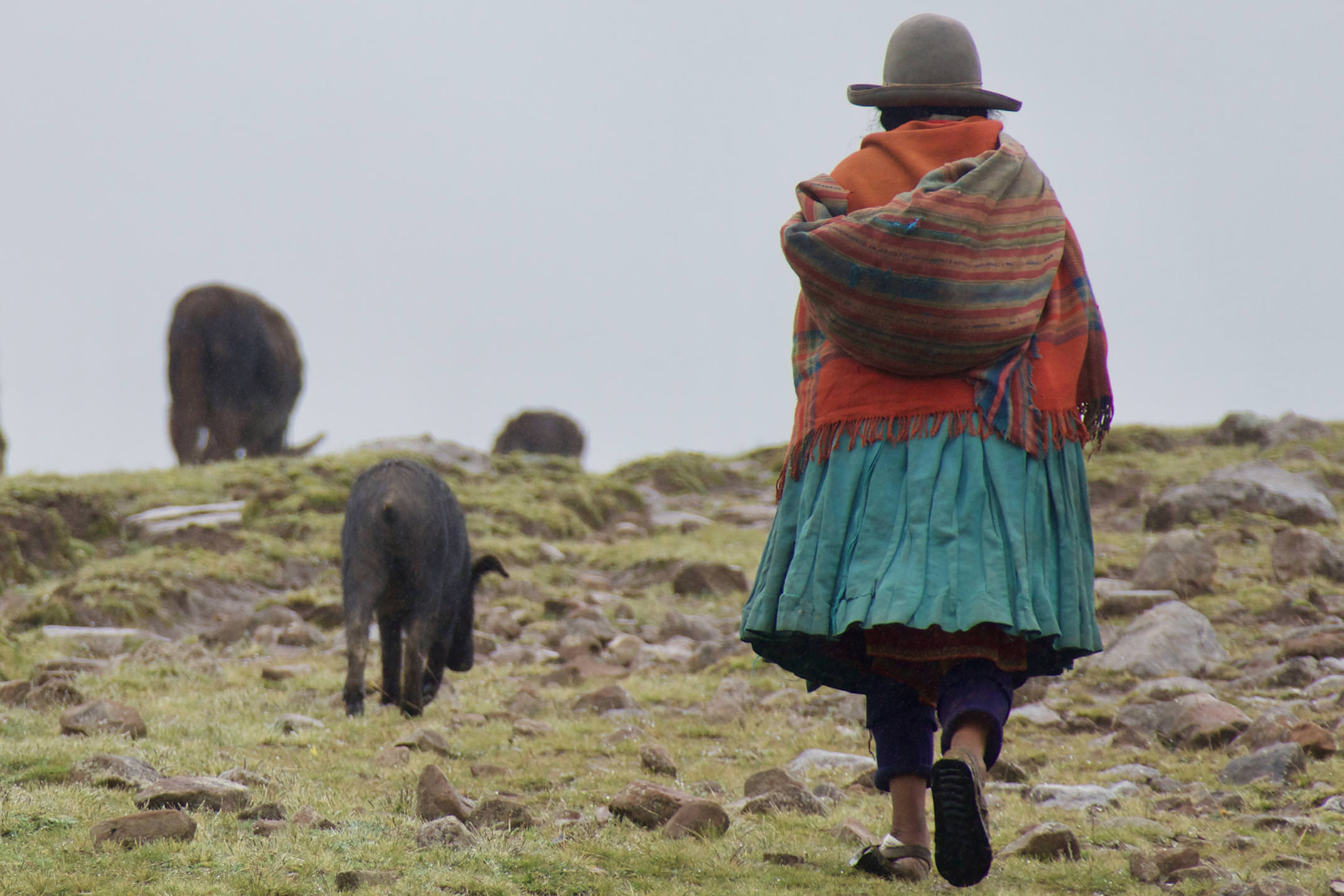 Peru sacred valley quenco village shepherd walking highlands