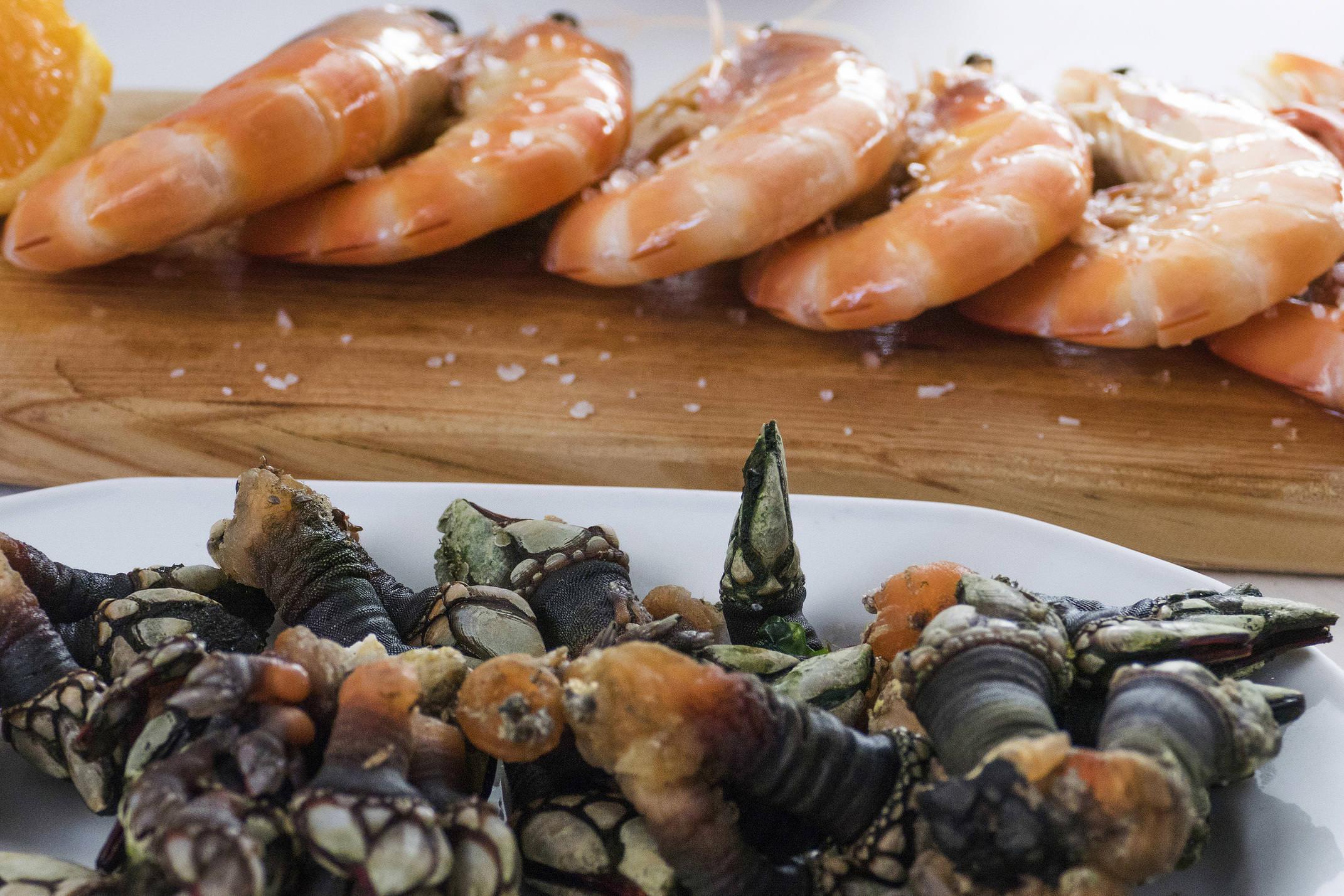 Portugal alentejo rota vicentina zambujeira seafood goose barnacles langostines
