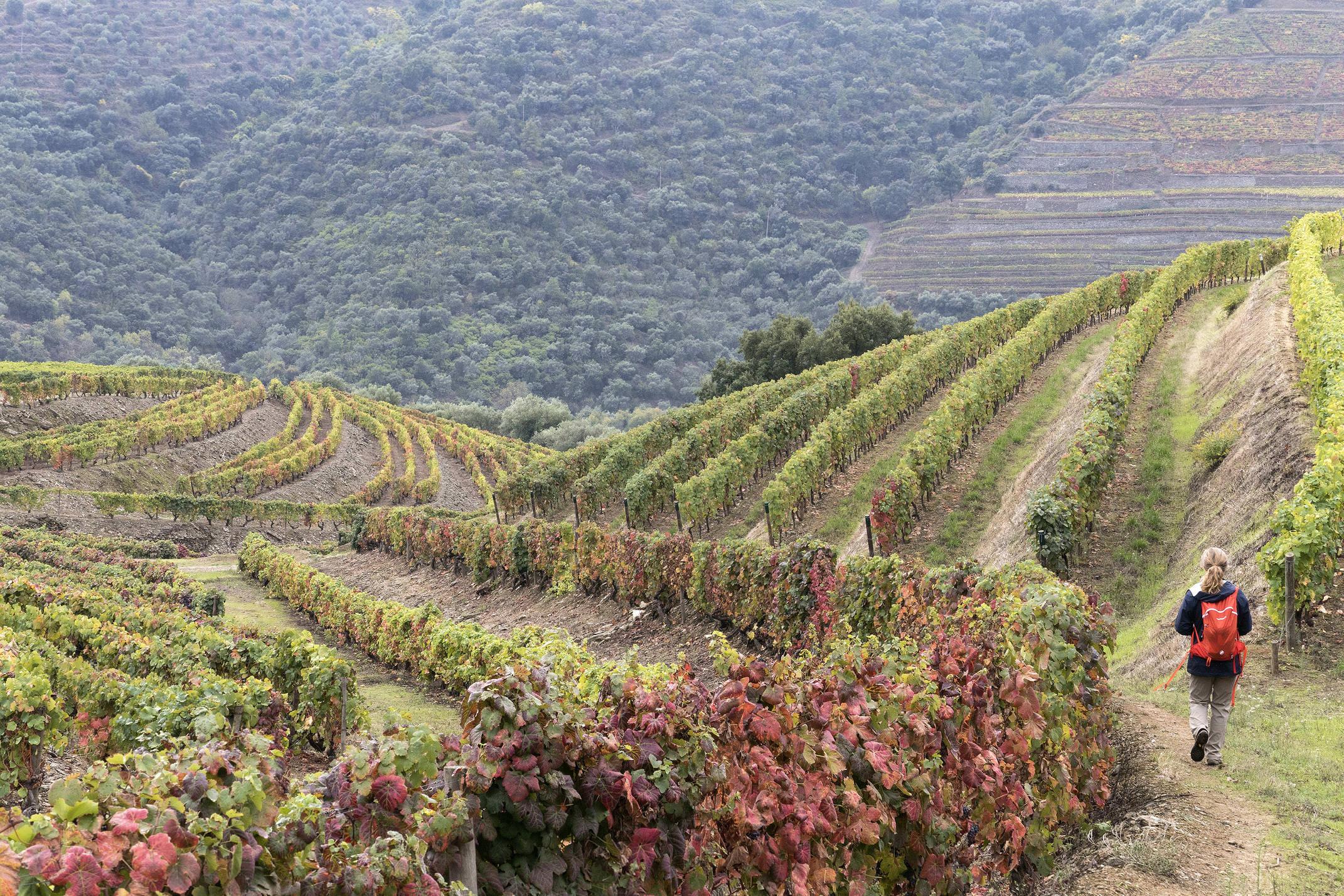 Portugal douro loivos pinhao hike five