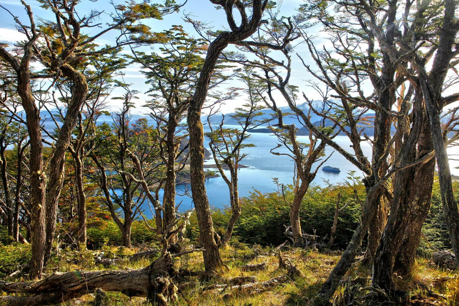 argentina-chile-australis-boat-woods-above-wulaia-fjord