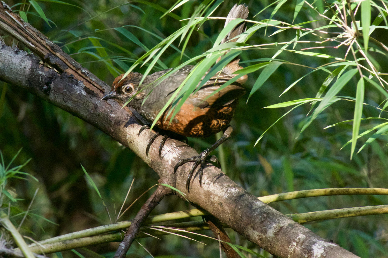 chile-patagonia-aysen-queulat-close-up-bird