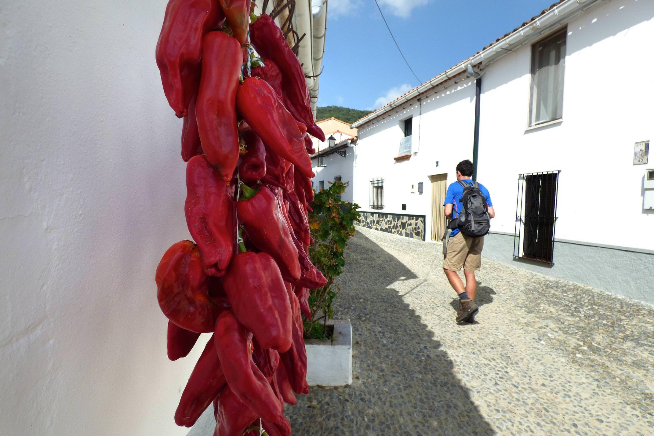 Spain andalucia aracena hills peppers in navahermosa village