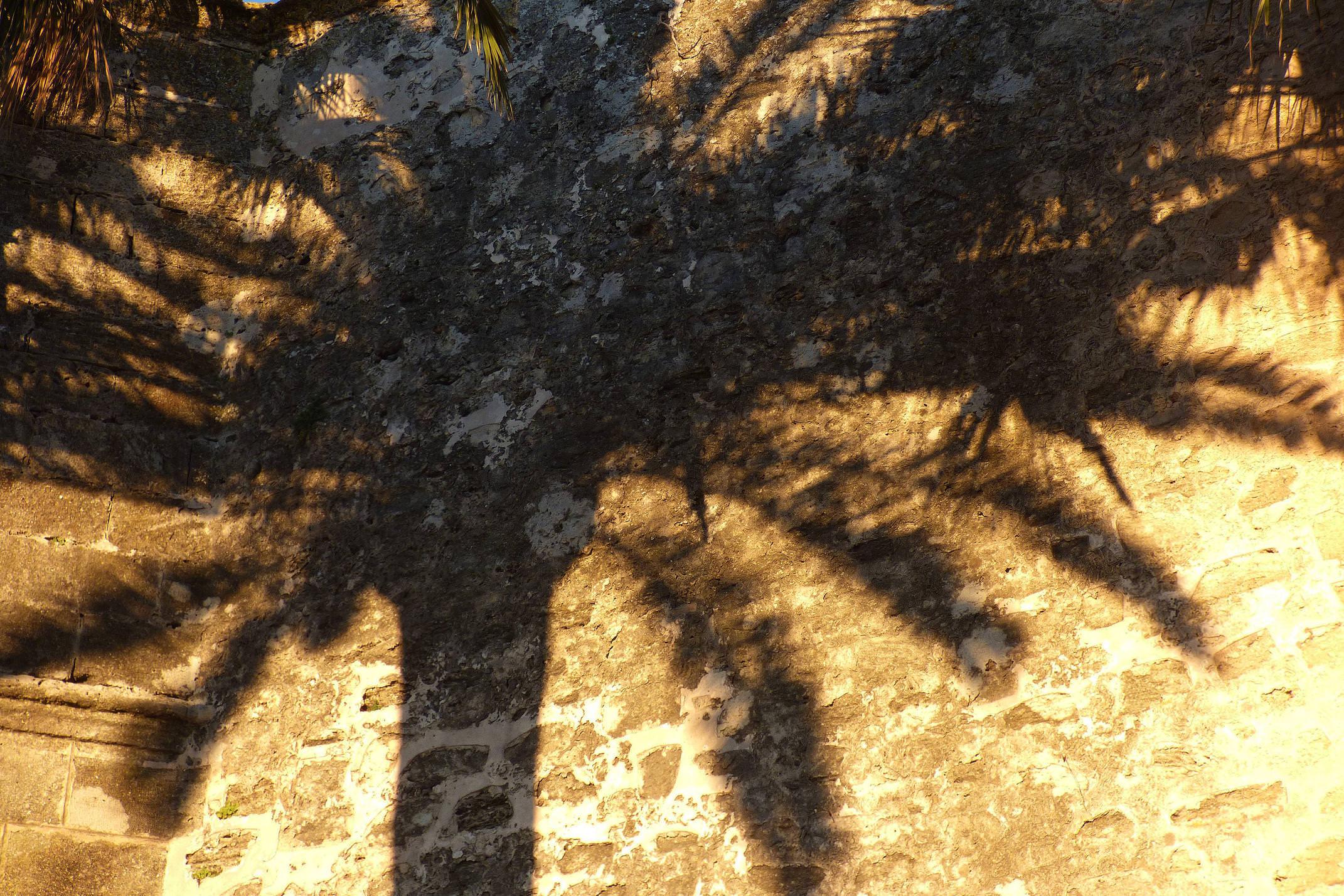 Spain andalucia cadiz vejer palm shadow detail