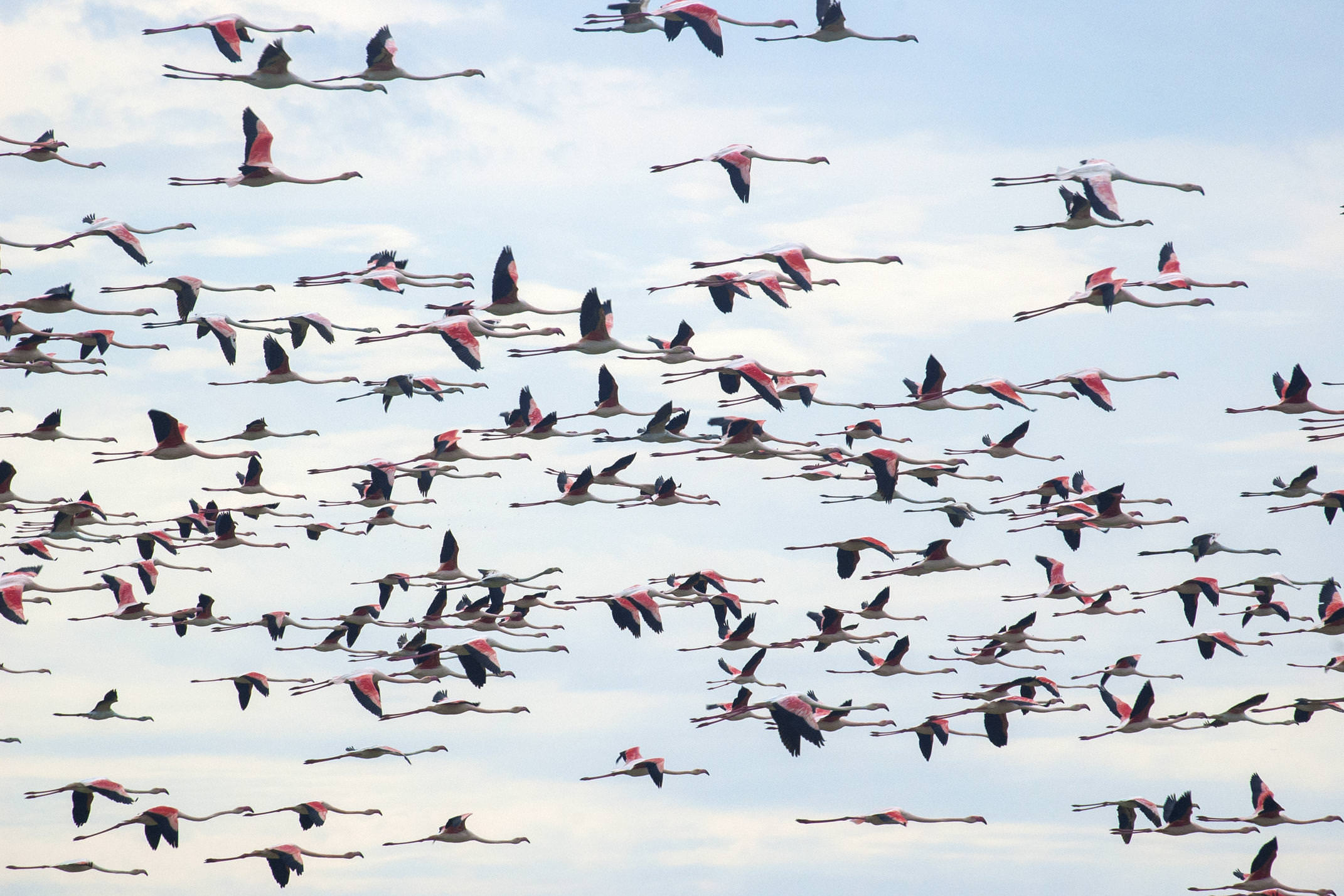 Spain andalucia doñana national park flamingos c jcgonzalez