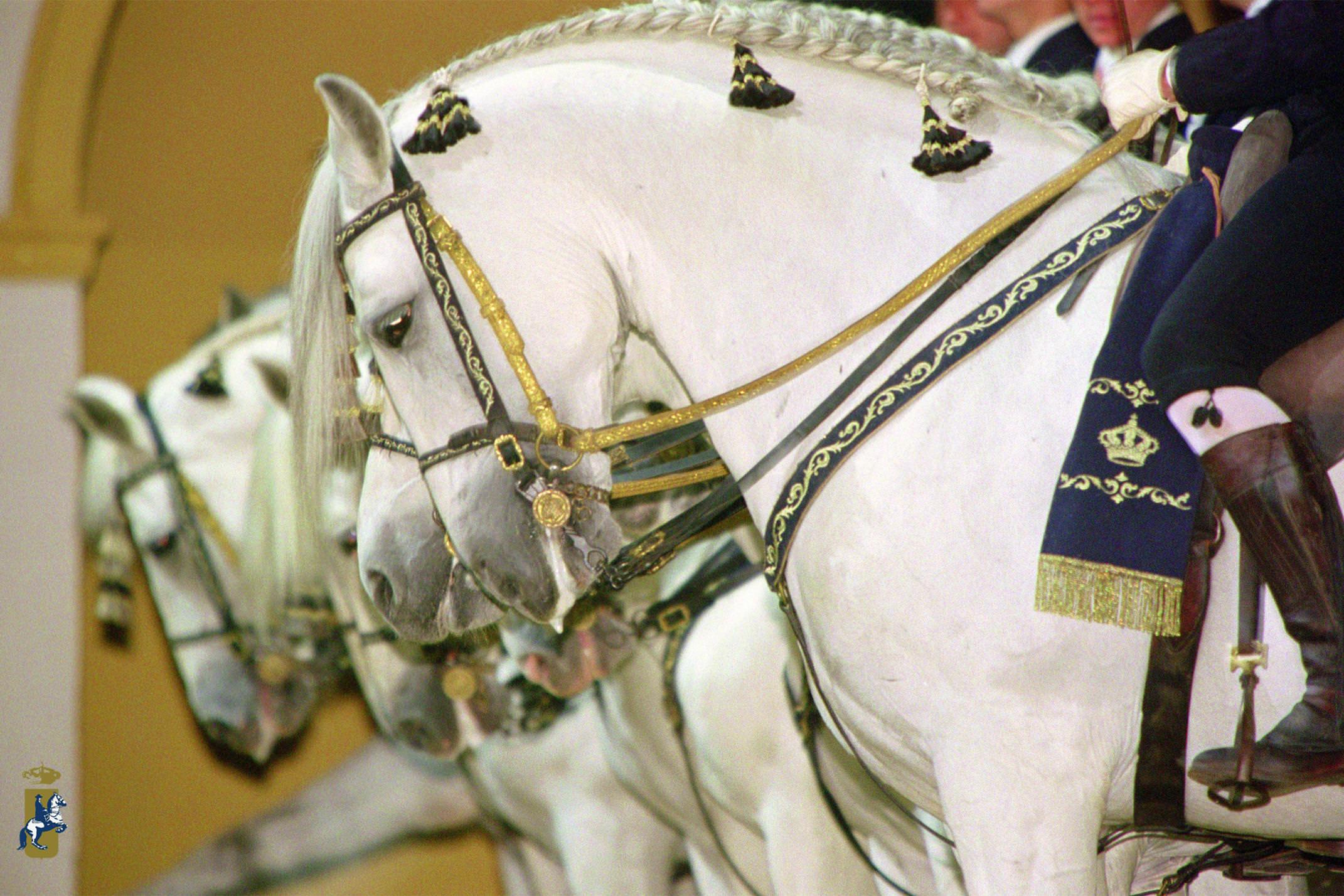 Spain andalucia jerez royal equestrian school horses c royal equestrian school