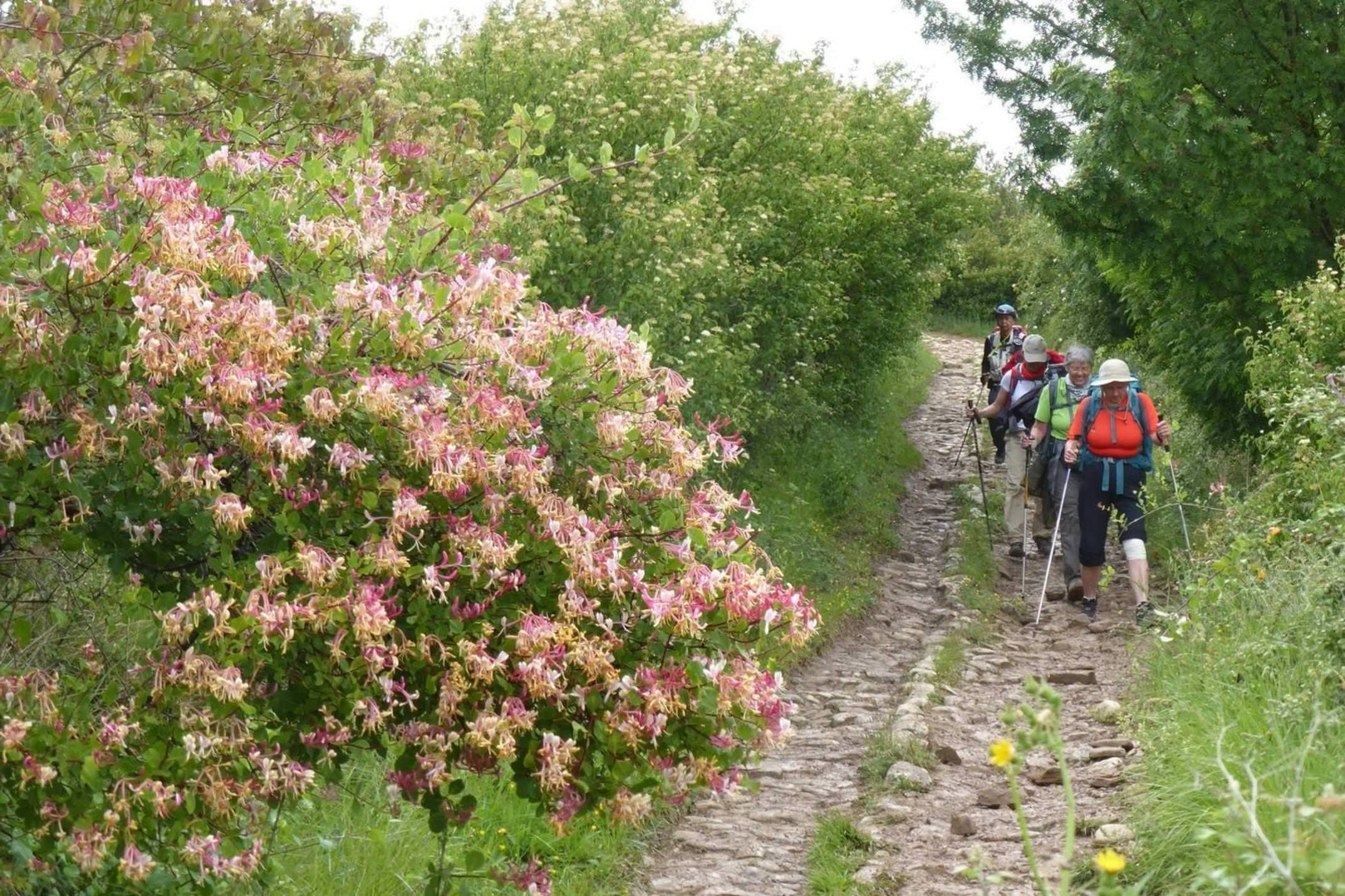 Spain camino ladies walking pink wild flowers and greenery
