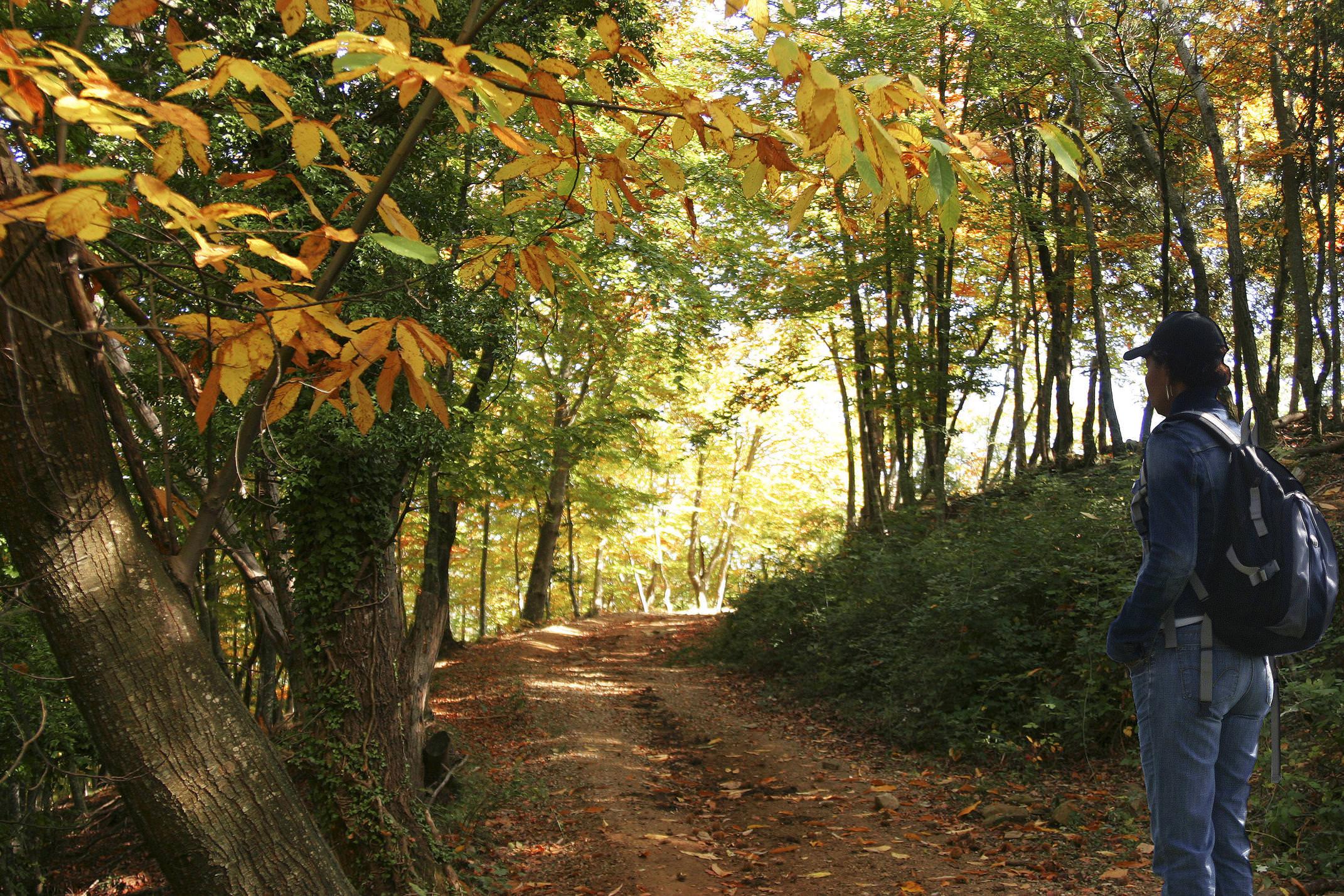 Spain catalonia garrotxa ventos autumn c ventos