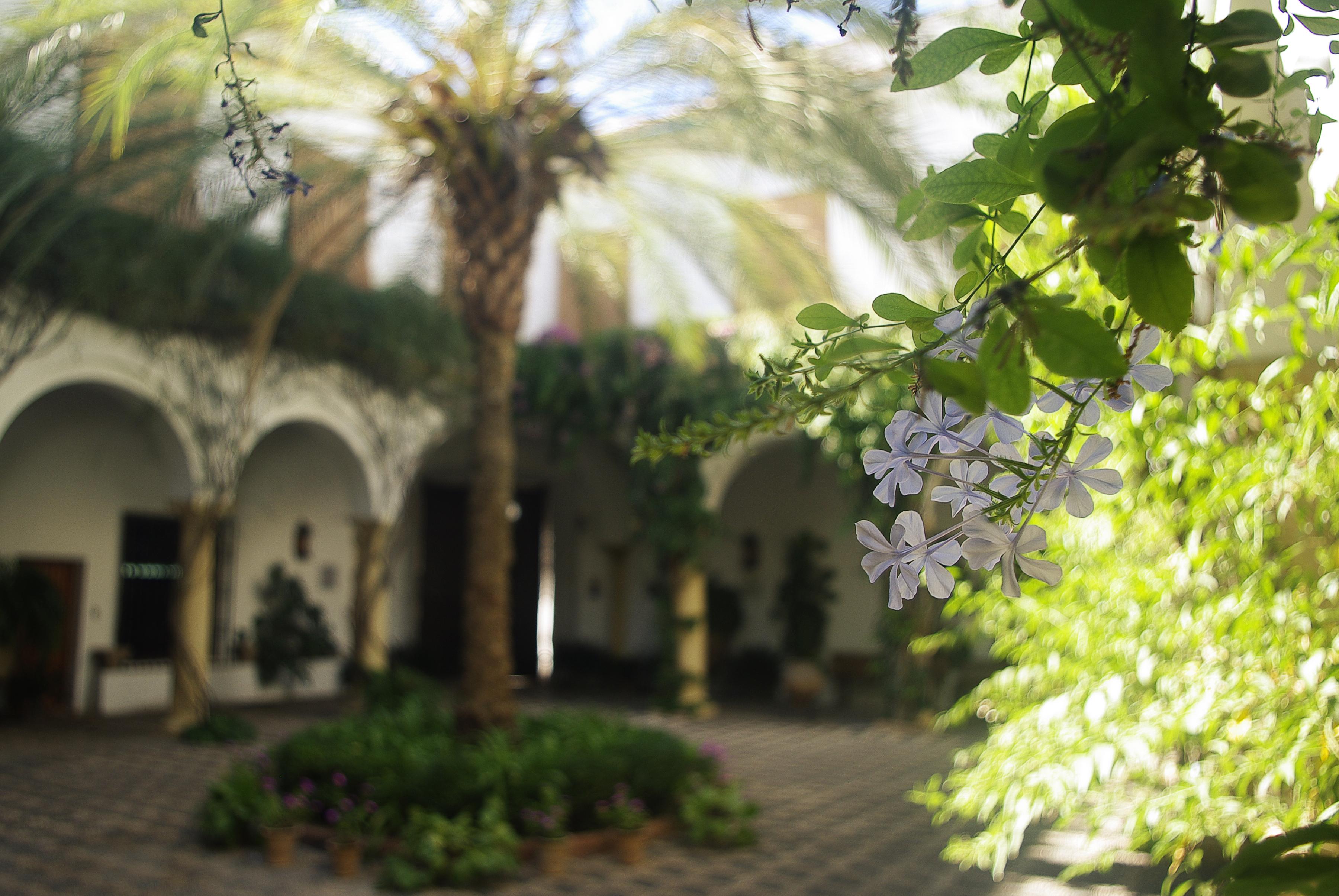 Spain cordoba viana palace patios chris bladon