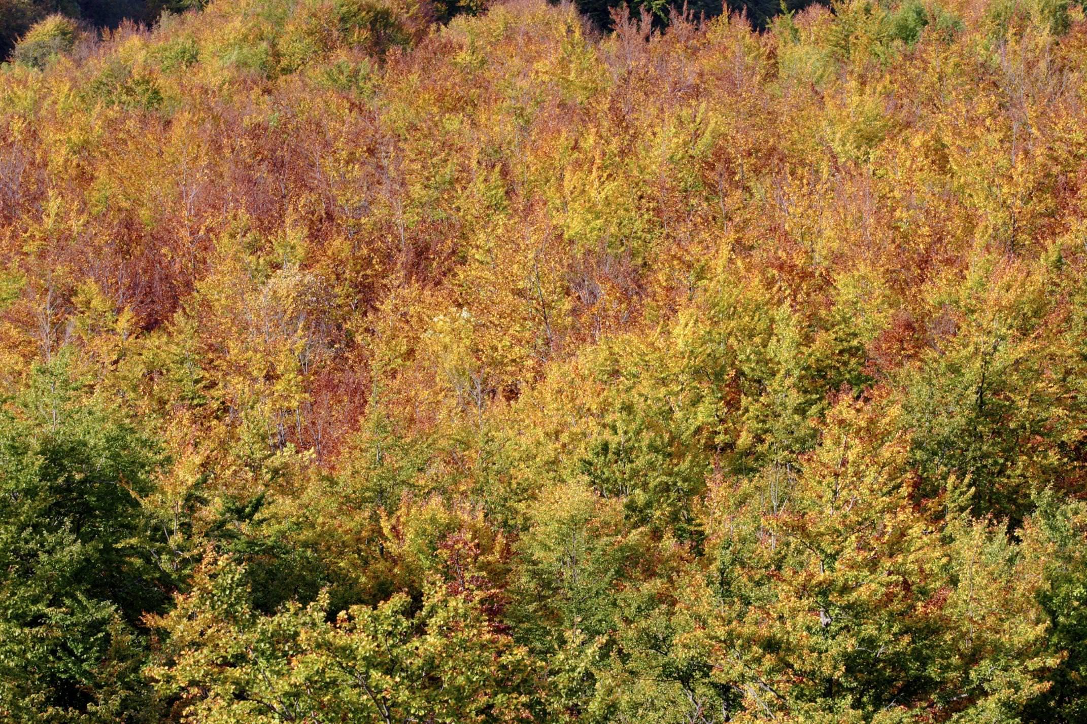 Spain picos de europa autumn trees close up
