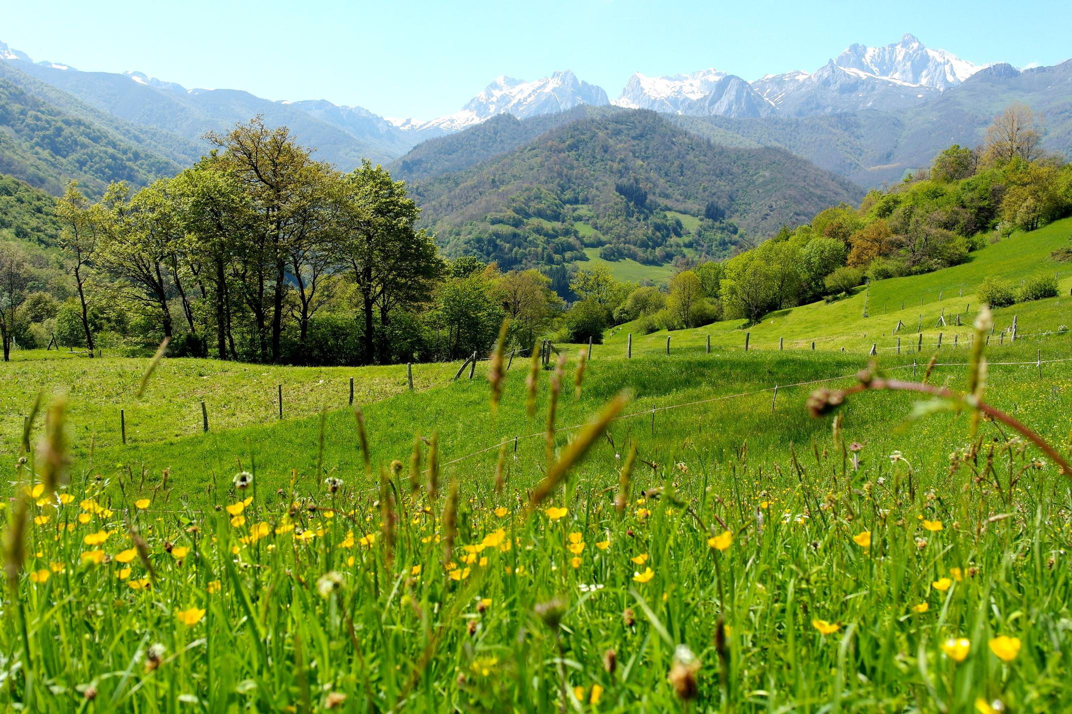 Spain picos de europa flower meadows spring