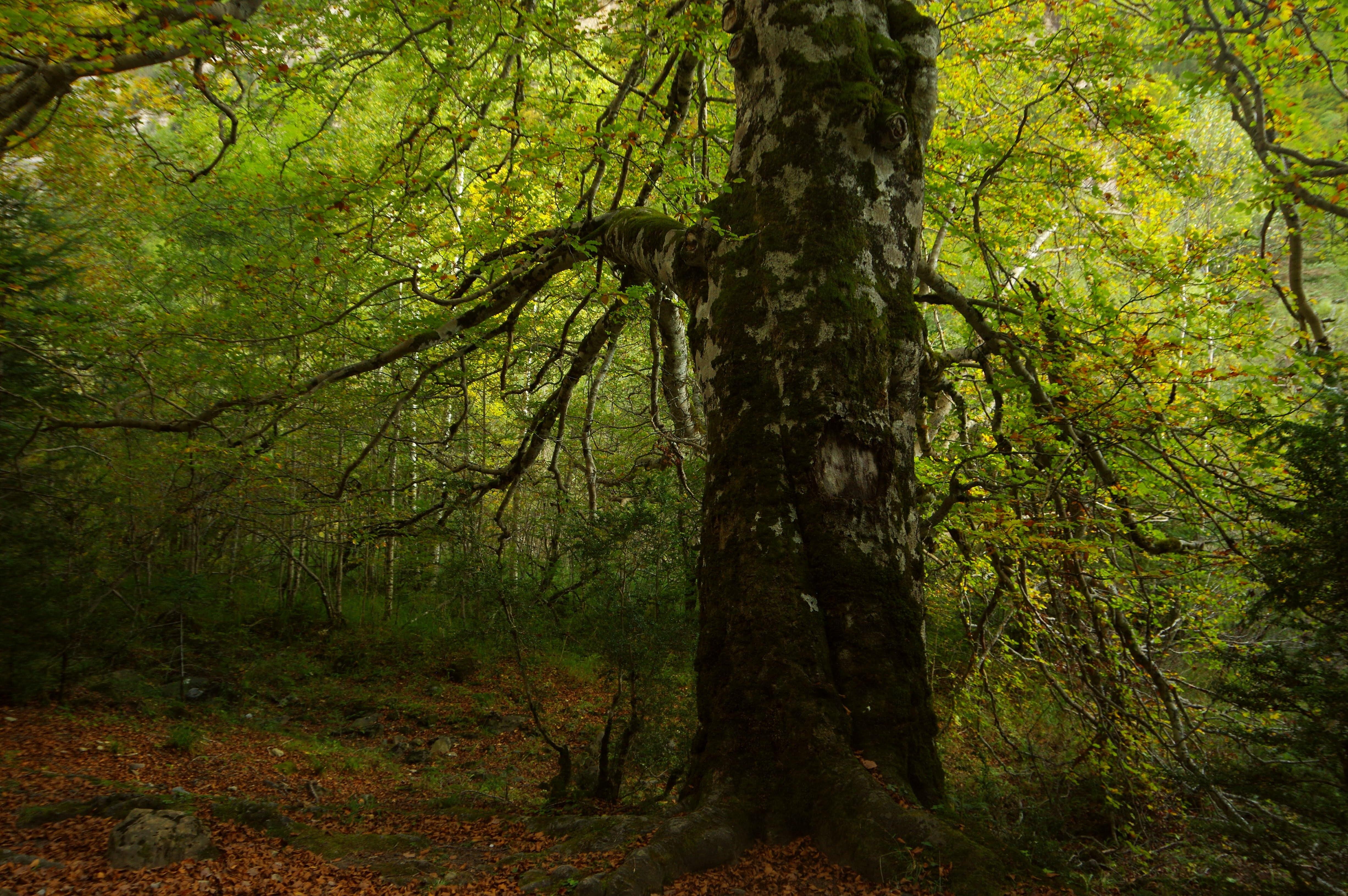 Spain pyrenees ordesa valley chris bladon 279