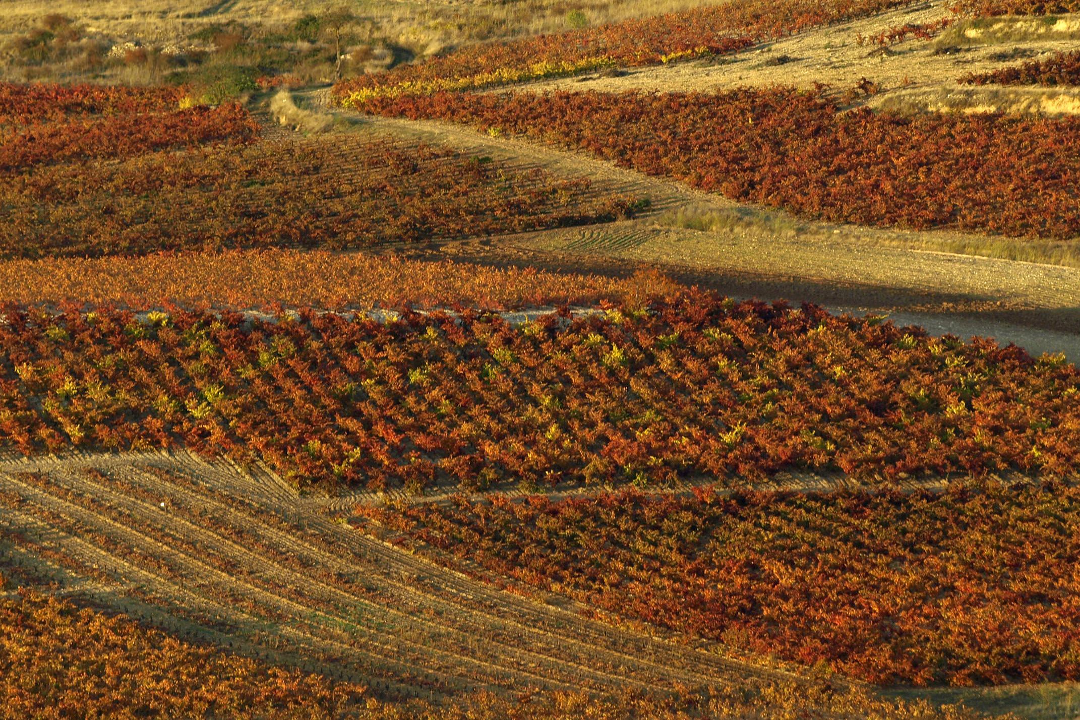 Spain rioja vinyards autumn c nanisub2