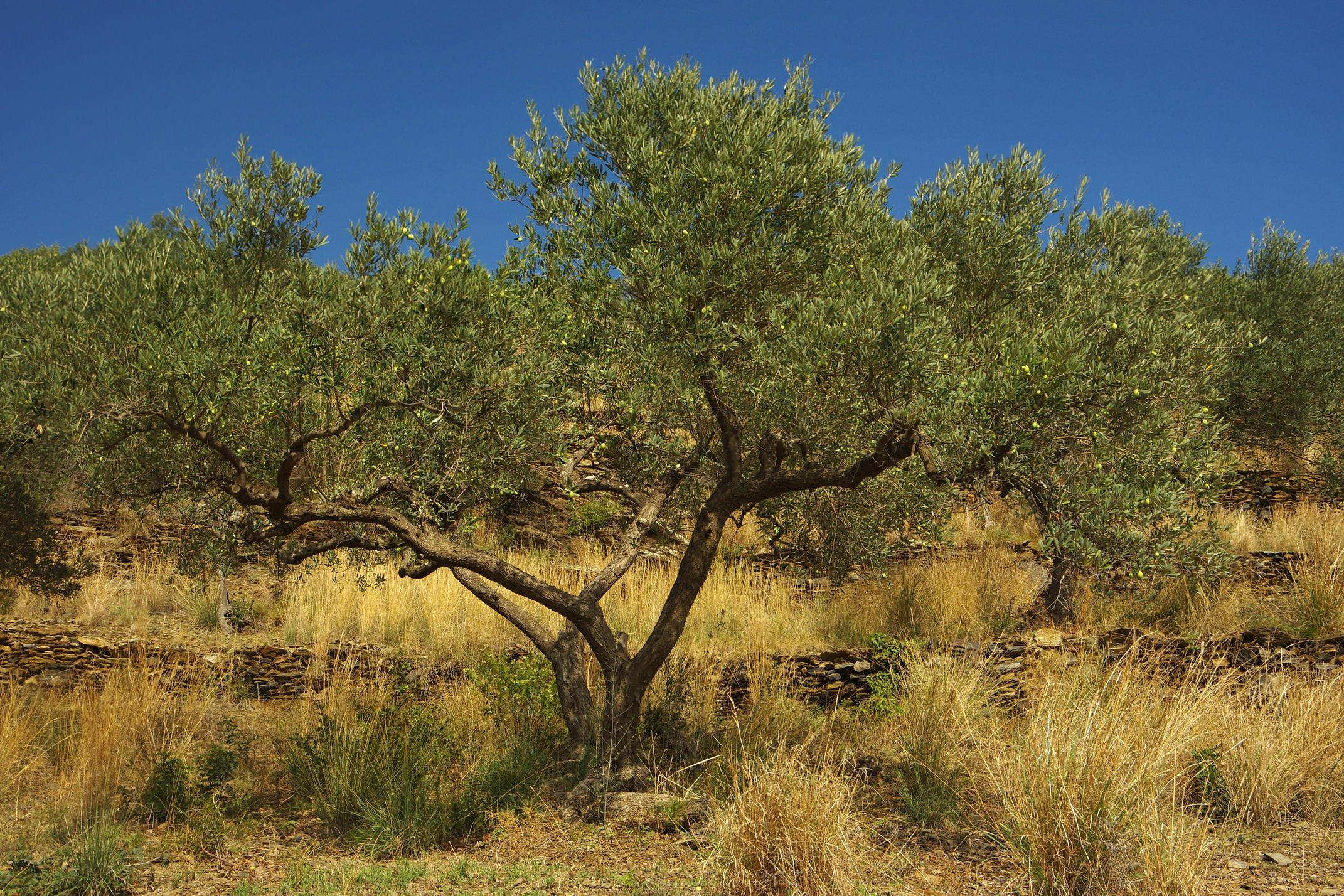 Spain catalonia cap de creus chris bladon 127