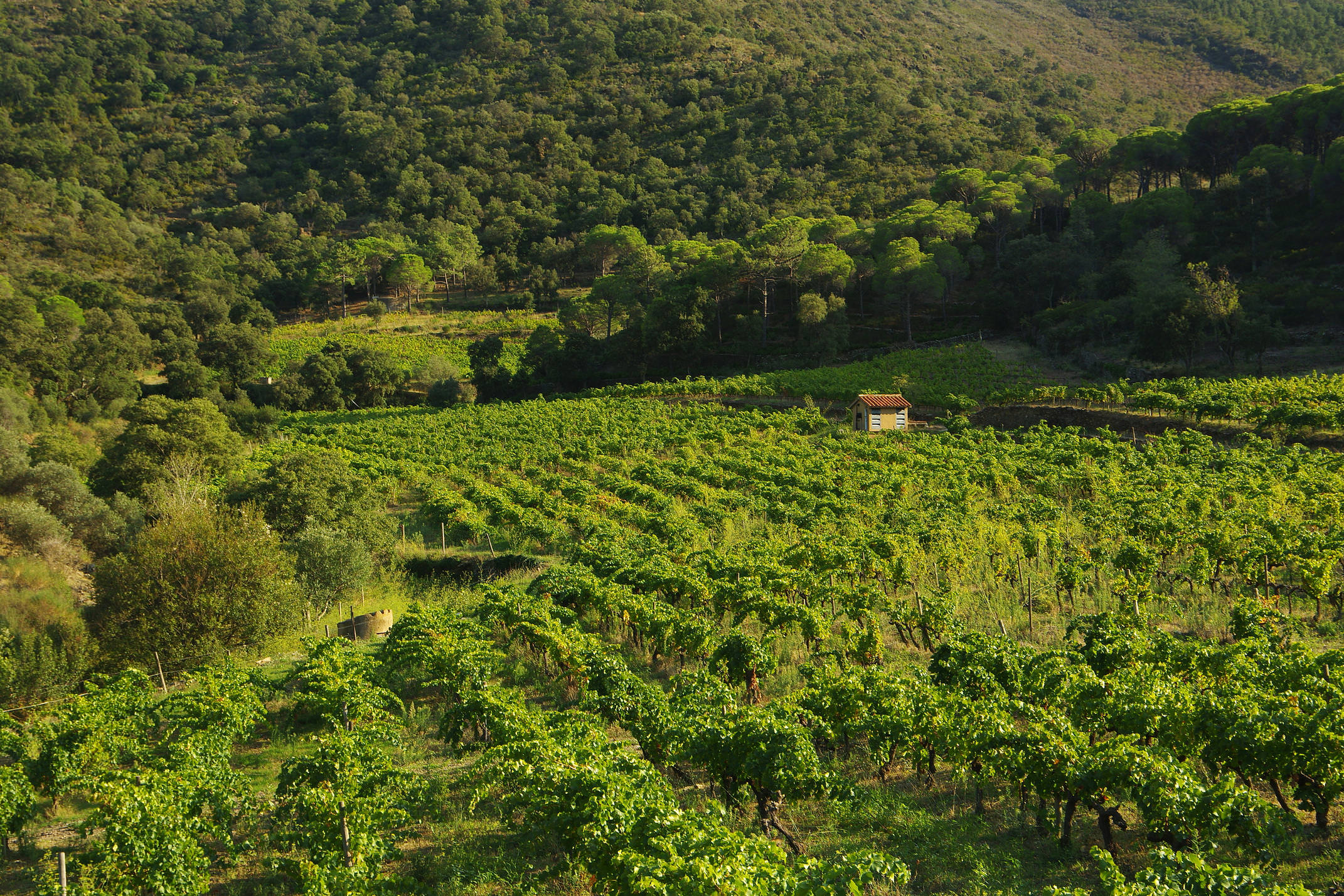 Spain catalonia mas estela chris bladon 19